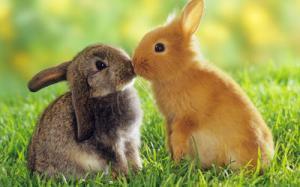 rabbits-3418-400x250